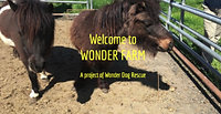 Welcome to Wonder Farm