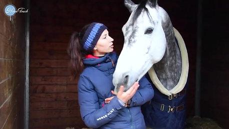 - LE POINT DE KELLY #1 _ la coordination autour du cheval -._HD