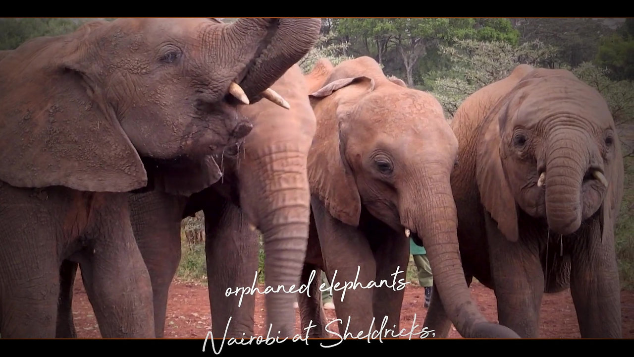 KENYA: ELEPHANTS