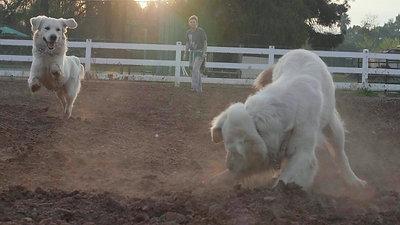 Fetch Clover Tristan