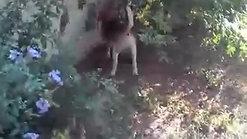 Cani giocano al centro cinofilo Danny's Pet Village di Foggia