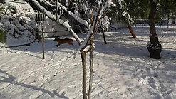 Cane gioca sulla neve al centro cinofilo Danny's Pet Village di Foggia