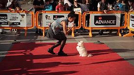 Desfile Canino | ZU Braga