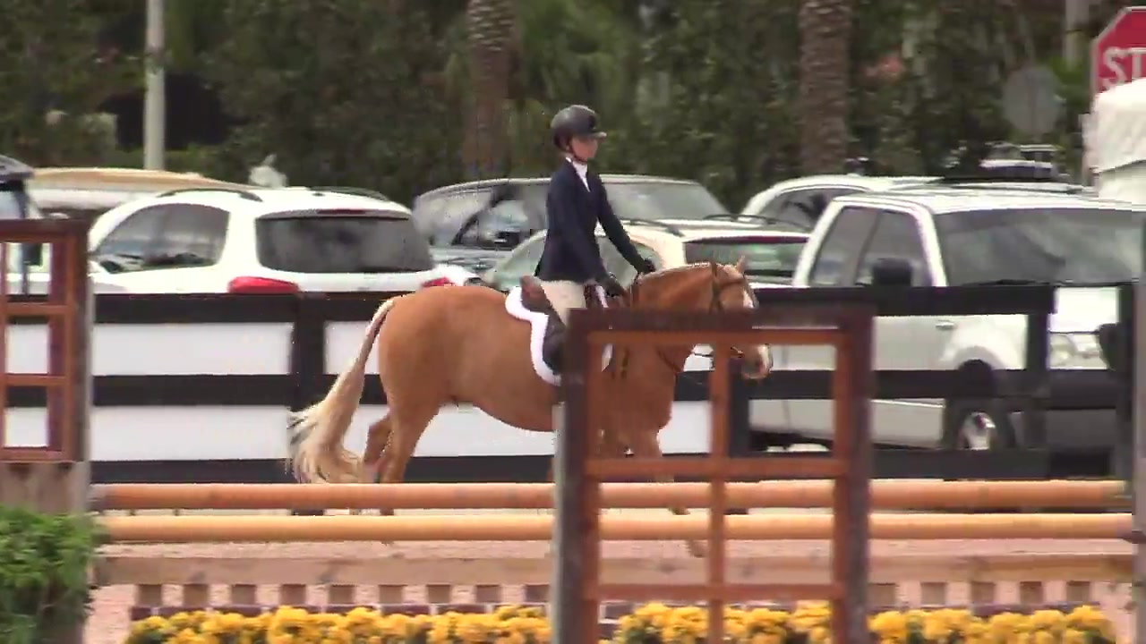 2019 WEF9 1st Chic In Time 85 Large Pony Confirmation