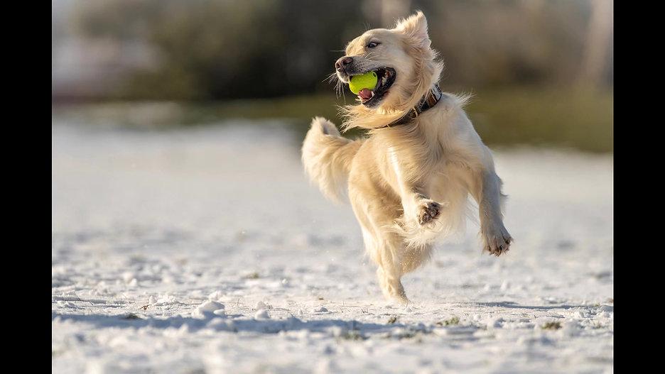 Hunde Doku 1