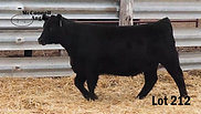 Lot 212 MA Erica Blackbird 9712
