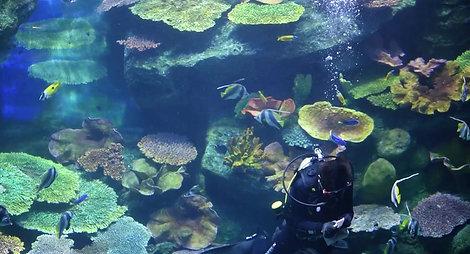 Aquarium de Bangkok