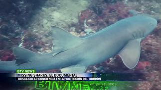 MISSING SHARKS