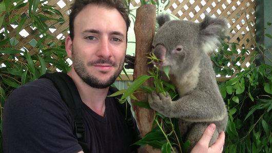 BON PLAN : Caresser des koalas en Australie !