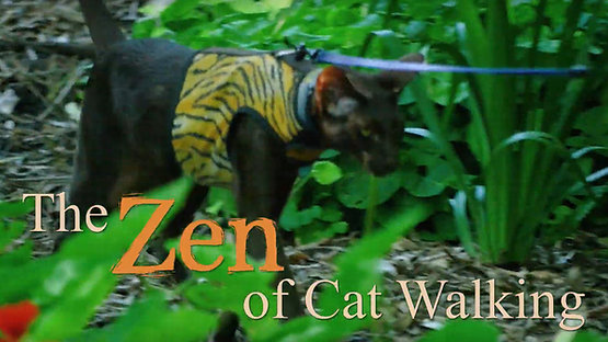 The Zen of Cat Walking