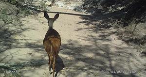 Warthogs and Nyala