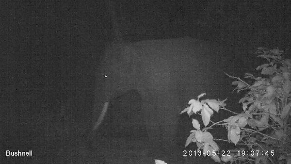 Tusker at night