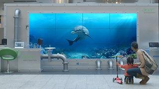 Acer - Dolphin