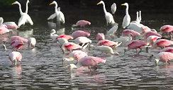 Birds Barra