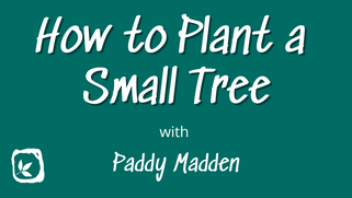 How to Plant a Small Tree