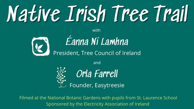 About the Native Irish Tree Trail