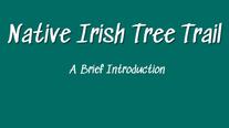 The Irish Tree Trail - A Brief Introduction