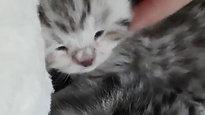kittens Sansa 2019