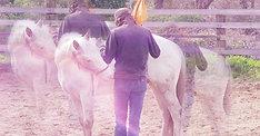 Le cheval dans le bon sens