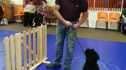 Puppy Class: gate exercise