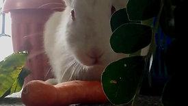 Los Conejos y Nosotros