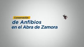 Conservación de anfibios en el Abra Zamora