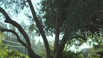 Jungle Bamboo and Palm Nursery