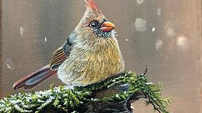 #10 Female Cardinal