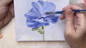 #6 Blue Poppy