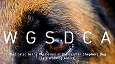 IPO Dogposrt Australia. Get involved. Make a difference- The ultimate breed test