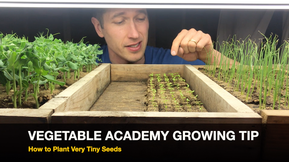 How to Plant Very Tiny Seeds