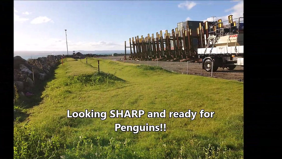 New Zealand's first on-port Penguin Habitat sanctuary! 🐧🐧🐧😲✔💯