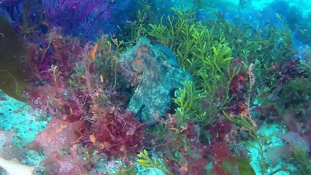 PUNTA MUXIEIRO - Islas Cíes