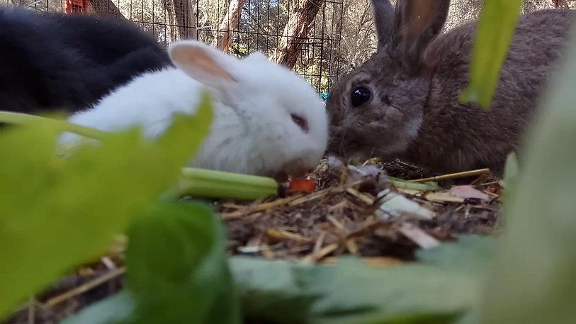 ארנבונים