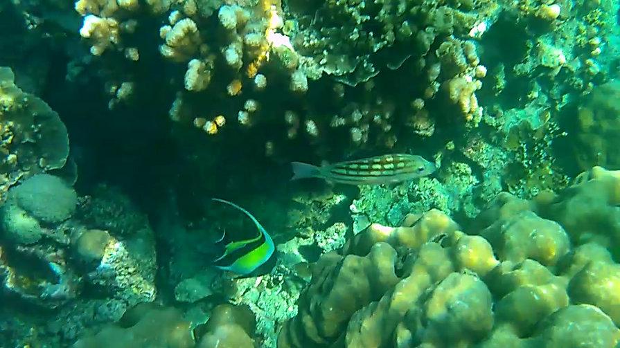 Snorkeling à Surin