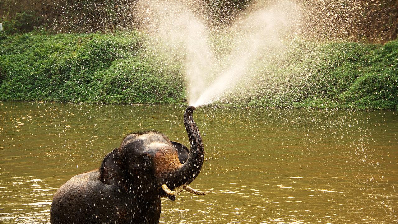 LAEHLI & The Elephants