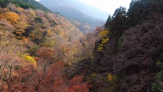 【山の禮讚】| Tottori Wasabi Farm