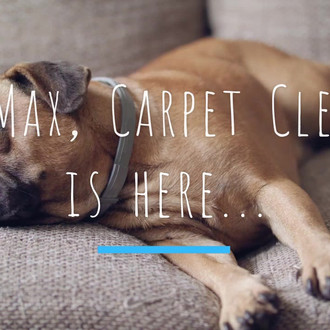 Read More Carpet Cleanse Specializes In Upholstery Fine Fabric Cleaning