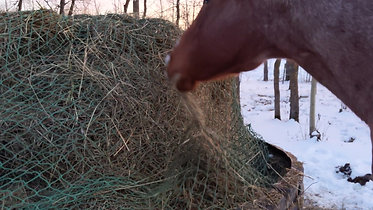 Eating from Poly Hay Ring