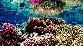 Reef & Rainforest Research Centre