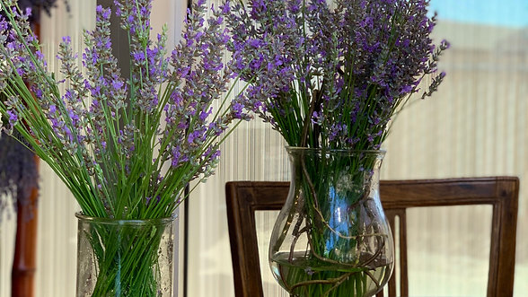 Lavender 101