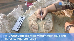 Ice Age Fossils Emerge in LA Metro