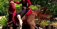 A Centaure's ride