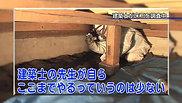 朝まるJUST Vol.3 ~建物調査篇~