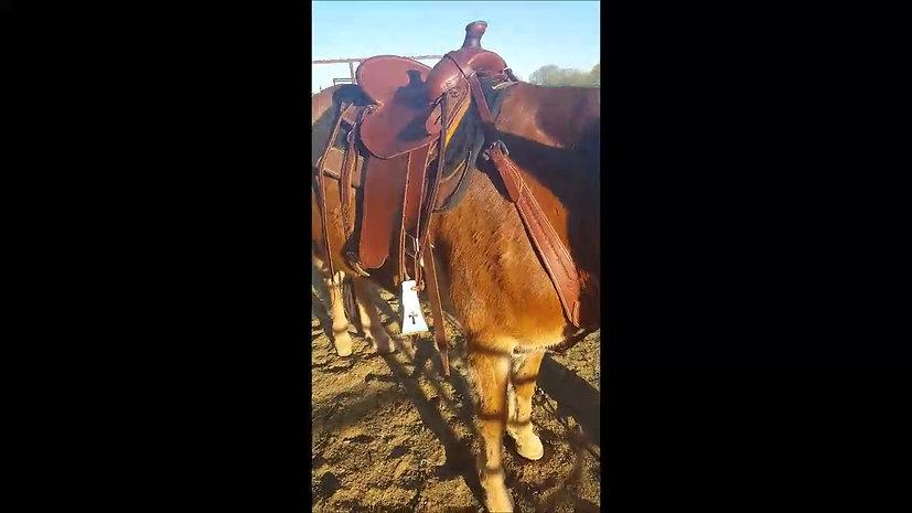 Rockin NT Mules Saddle Fit Demo