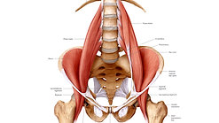 Mini practice for Psoas length-Release hips and back