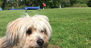 Dog Reactive Crossbreed