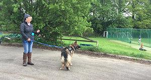 Anxious German Shepherd Puppy