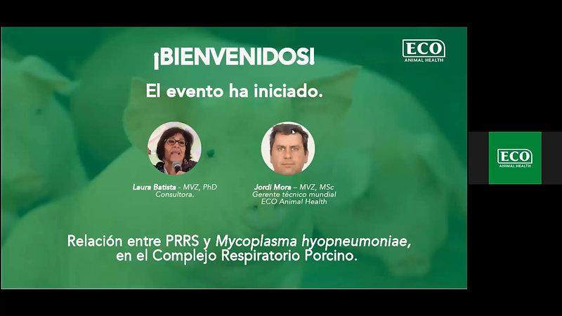 RELACION ENTRE PRRS Y MYCOPLASMA HYOPNEUMONIAE EN EL COMPLEJO RESPIRATORIO PORCINO.