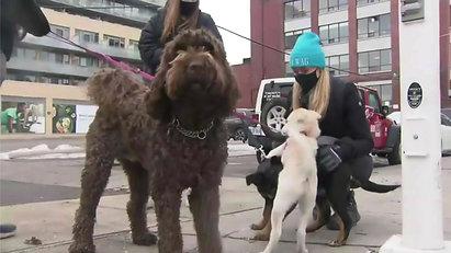 Toronto CTV Dog Walking Re-Opened